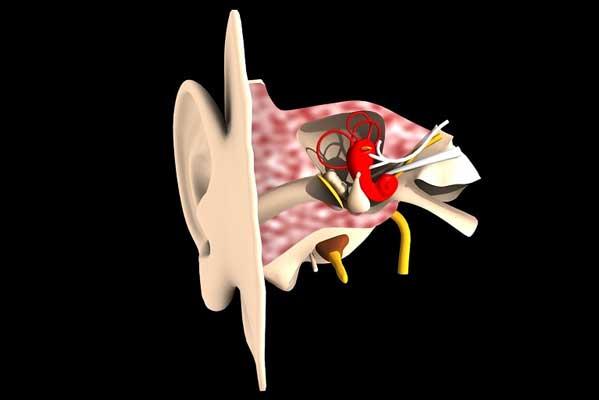 Coupe d'une oreille